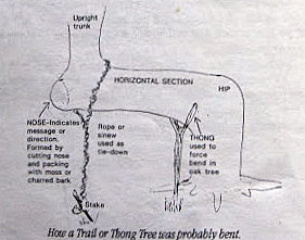 trail_tree_how