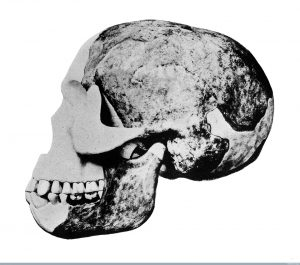 """M0013579 Skull of the """"Eoanthropus Dawsoni"""" (Piltdown Man) Credit: Wellcome Library, London. Wellcome Images images@wellcome.ac.uk http://wellcomeimages.org Skull of the """"Eoanthropus Dawsoni"""" (Piltdown Man) Published:  -  Copyrighted work available under Creative Commons Attribution only licence CC BY 2.0 http://creativecommons.org/licenses/by/2.0/"""
