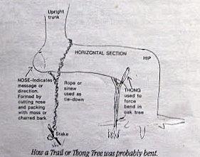 trail_tree_how